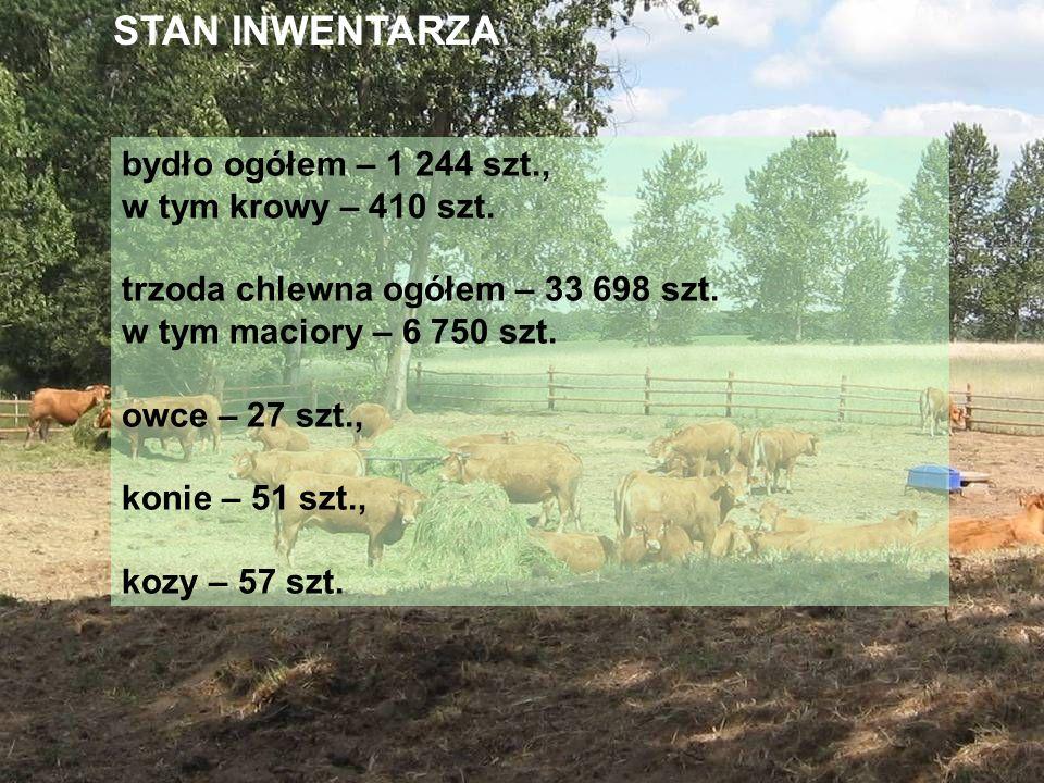 bydło ogółem – 1 244 szt., w tym krowy – 410 szt. trzoda chlewna ogółem – 33 698 szt. w tym maciory – 6 750 szt. owce – 27 szt., konie – 51 szt., kozy