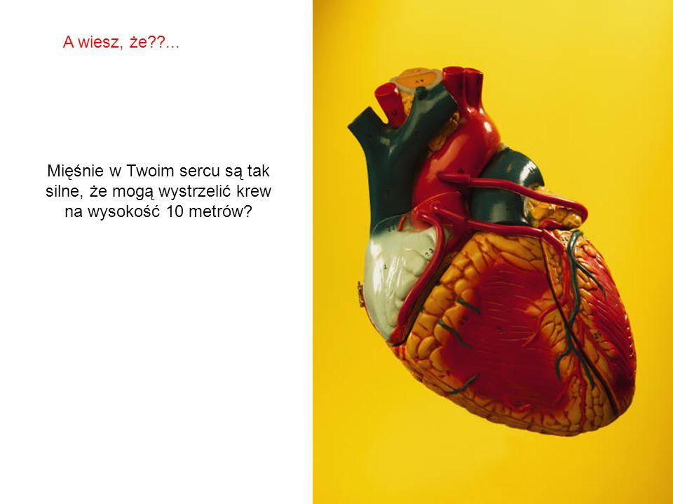 SABIAS QUE… Mięśnie w Twoim sercu są tak silne, że mogą wystrzelić krew na wysokość 10 metrów.