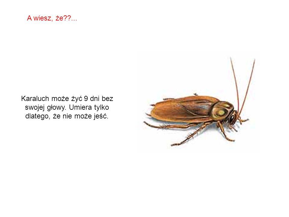 SABIAS QUE… Motyle czują smak nogami. A wiesz, że??...