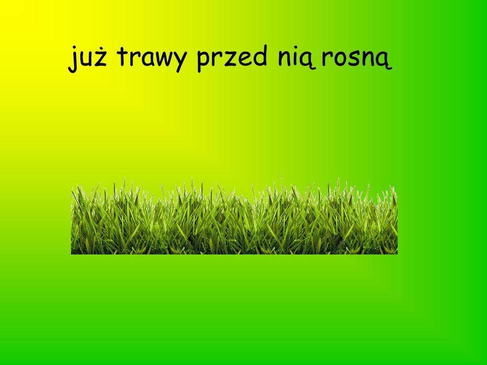 już trawy przed nią rosną