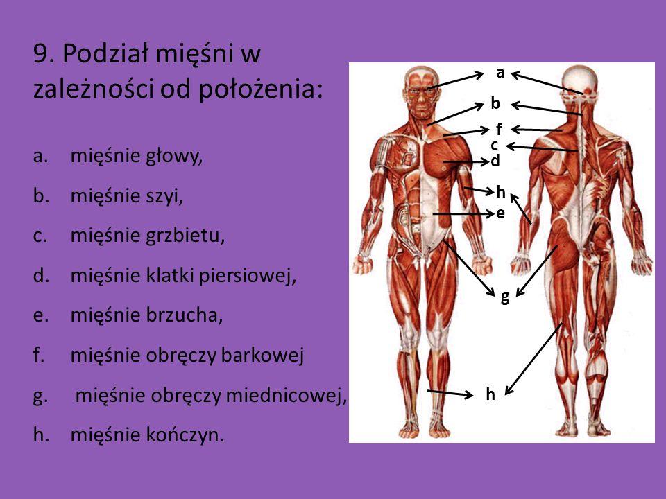 9. Podział mięśni w zależności od położenia: a.mięśnie głowy, b.mięśnie szyi, c.mięśnie grzbietu, d.mięśnie klatki piersiowej, e.mięśnie brzucha, f.mi