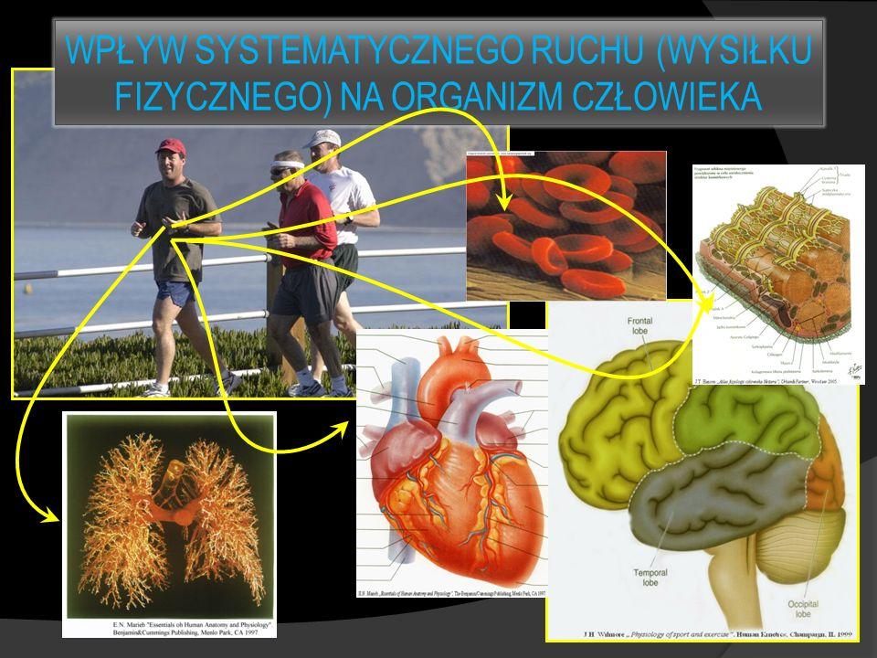 WPŁYW SYSTEMATYCZNEGO RUCHU (WYSIŁKU FIZYCZNEGO) NA ORGANIZM CZŁOWIEKA
