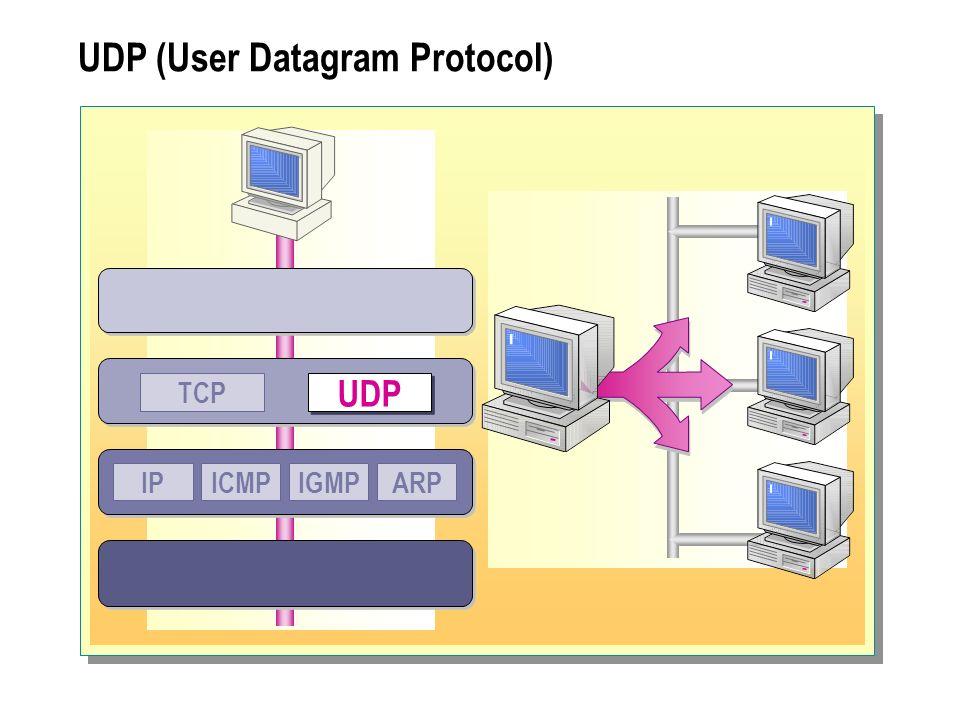 IP (Internet Protocol) Ruter UDPTCP IP ICMPIGMPARP