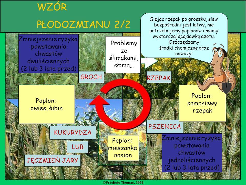Płodozmian WZÓR PŁODOZMIANU 2/2 Problemy ze ślimakami, słomą… RZEPAK PSZENICA KUKURYDZA LUB JĘCZMIEŃ JARY GROCH Poplon: mieszanka nasion Poplon: samos