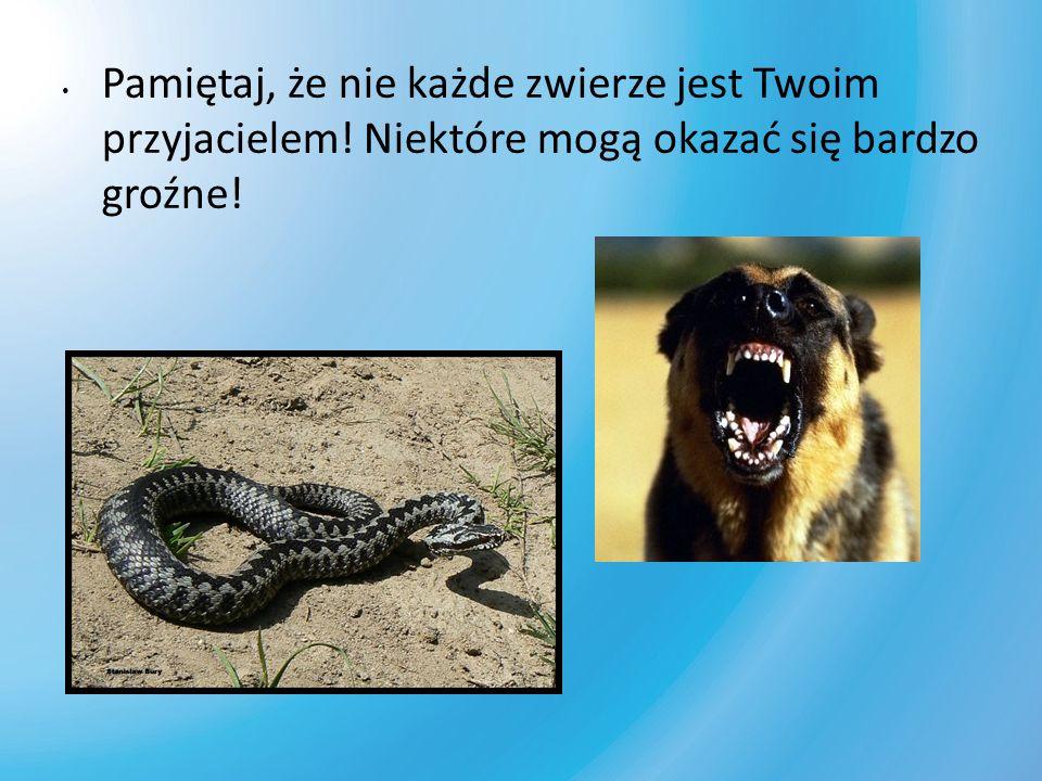 Pamiętaj, że nie każde zwierze jest Twoim przyjacielem! Niektóre mogą okazać się bardzo groźne!