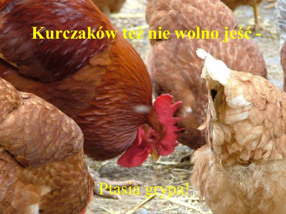 Kurczaków też nie wolno jeść - Ptasia grypa!