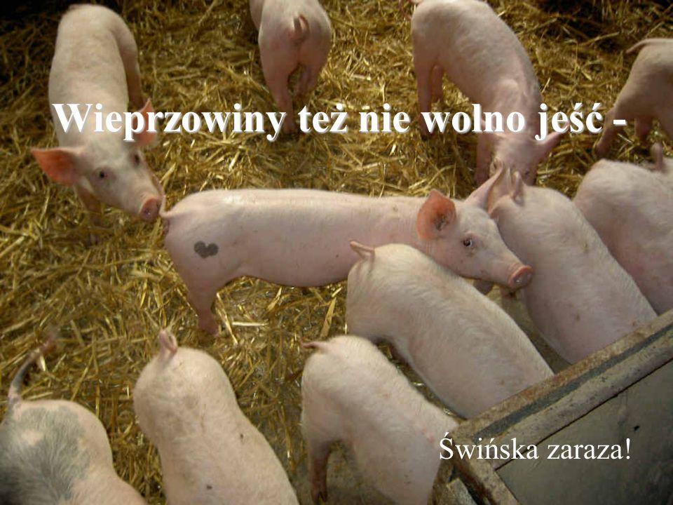 Wieprzowiny też nie wolno jeść - Świńska zaraza!