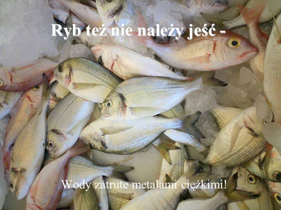 Ryb też nie należy jeść - Wody zatrute metalami ciężkimi!