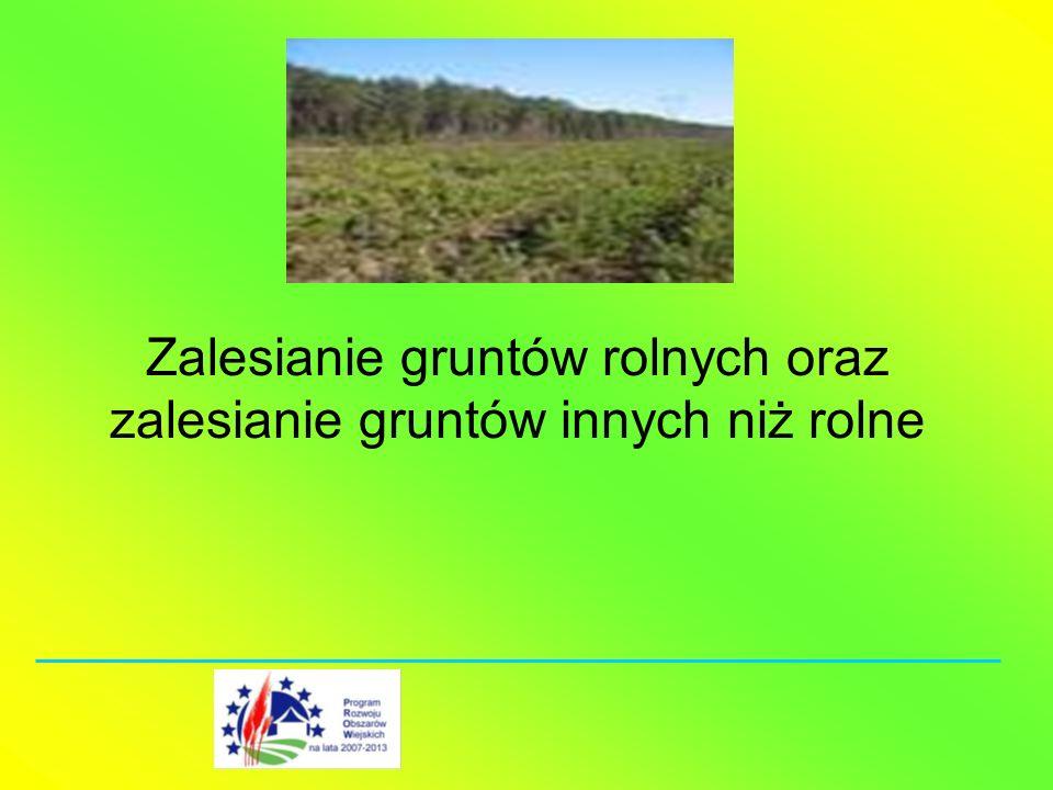 Zalesianie gruntów rolnych oraz zalesianie gruntów innych niż rolne