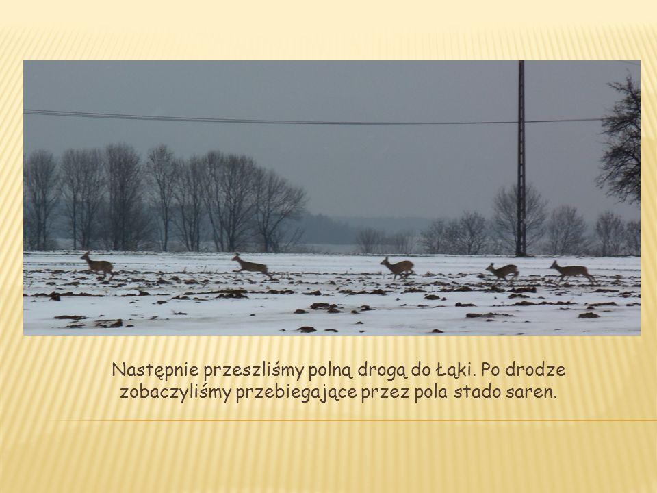 Następnie przeszliśmy polną drogą do Łąki. Po drodze zobaczyliśmy przebiegające przez pola stado saren.
