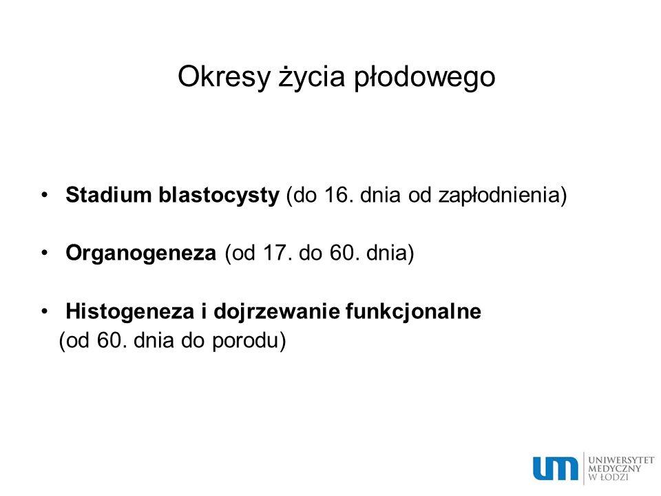 Okresy życia płodowego Stadium blastocysty (do 16. dnia od zapłodnienia) Organogeneza (od 17. do 60. dnia) Histogeneza i dojrzewanie funkcjonalne (od