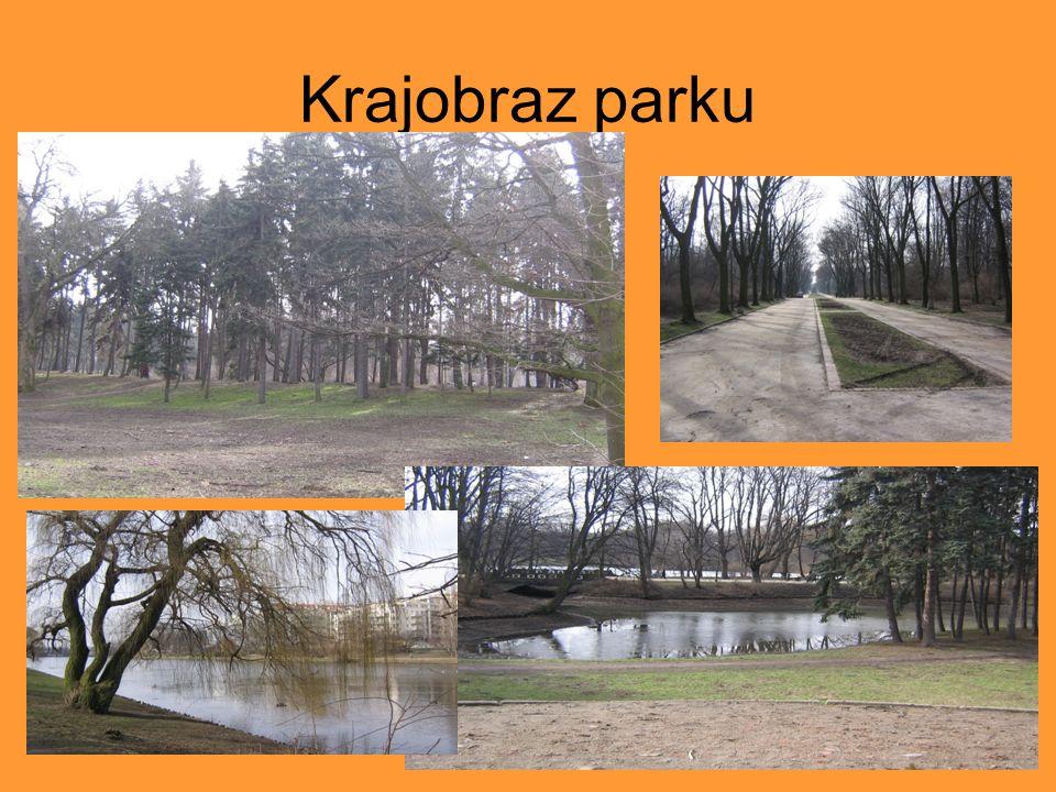 Krajobraz parku