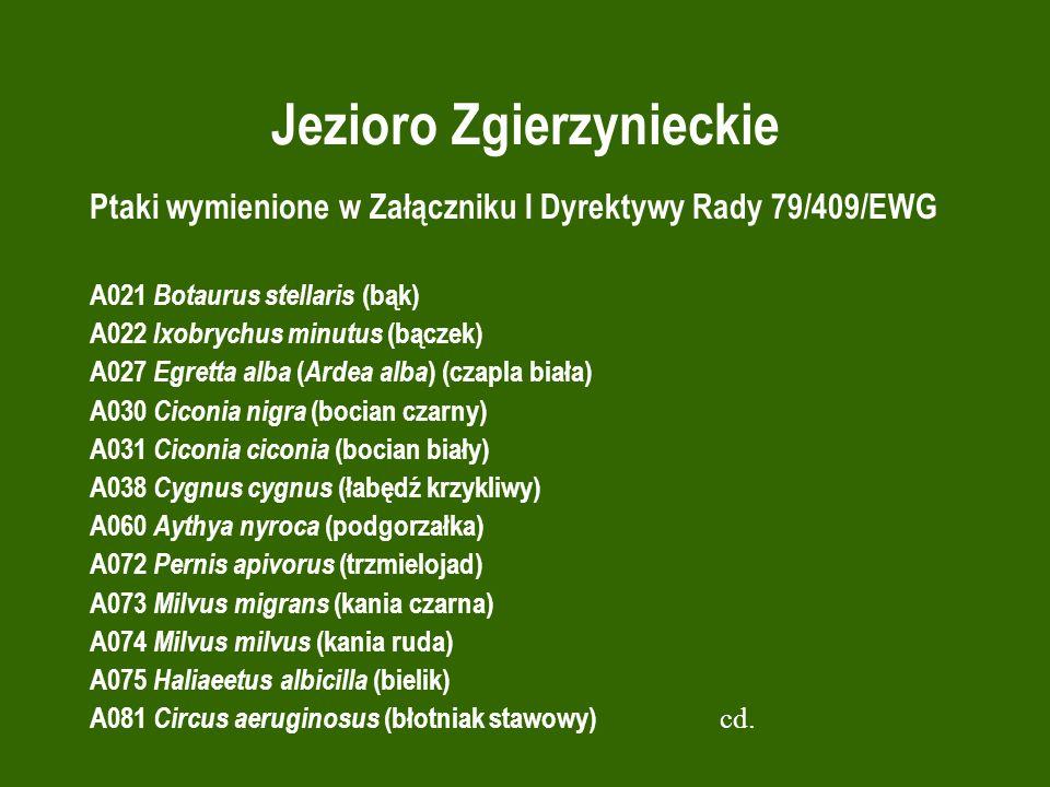 Jezioro Zgierzynieckie Ptaki wymienione w Załączniku I Dyrektywy Rady 79/409/EWG A021 Botaurus stellaris (bąk) A022 Ixobrychus minutus (bączek) A027 E