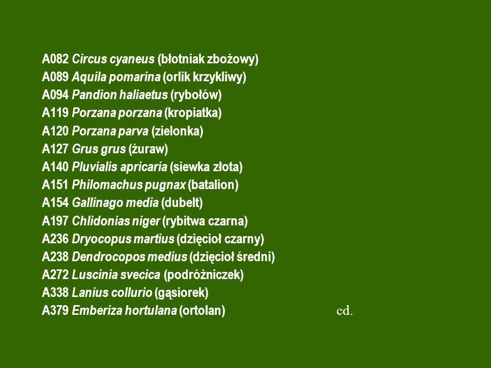 A082 Circus cyaneus (błotniak zbożowy) A089 Aquila pomarina (orlik krzykliwy) A094 Pandion haliaetus (rybołów) A119 Porzana porzana (kropiatka) A120 P