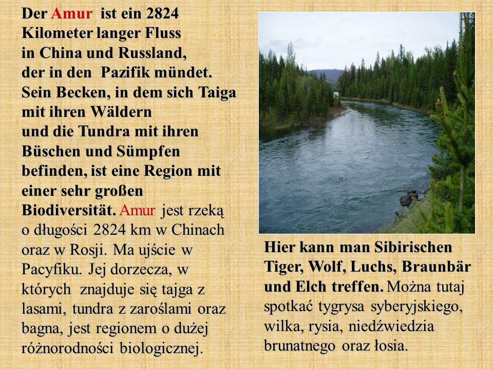 Der Amur ist ein 2824 Kilometer langer Fluss in China und Russland, der in den Pazifik mündet. Sein Becken, in dem sich Taiga mit ihren Wäldern und di
