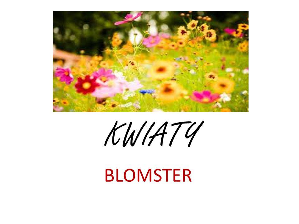 KWIATY BLOMSTER