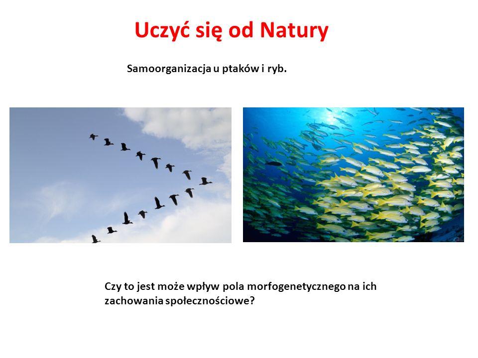 Samoorganizacja u ptaków i ryb. Czy to jest może wpływ pola morfogenetycznego na ich zachowania społecznościowe?