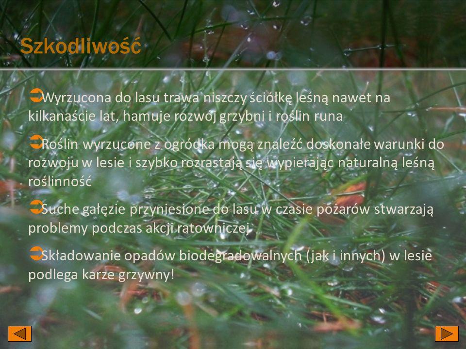 Szkodliwość  Wyrzucona do lasu trawa niszczy ściółkę leśną nawet na kilkanaście lat, hamuje rozwój grzybni i roślin runa  Roślin wyrzucone z ogródka mogą znaleźć doskonałe warunki do rozwoju w lesie i szybko rozrastają się wypierając naturalną leśną roślinność  Suche gałęzie przyniesione do lasu w czasie pożarów stwarzają problemy podczas akcji ratowniczej  Składowanie opadów biodegradowalnych (jak i innych) w lesie podlega karze grzywny!