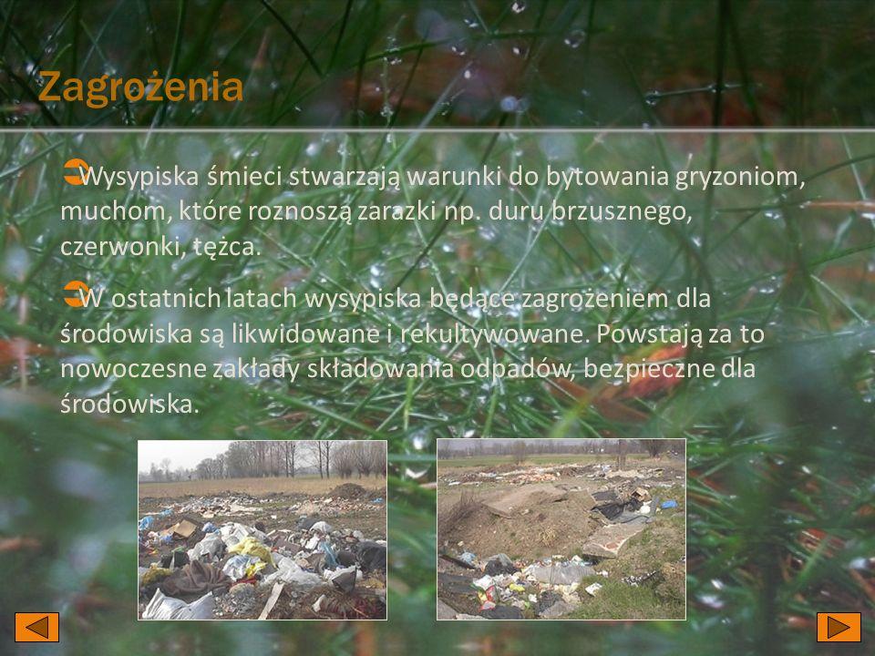  Wysypiska śmieci stwarzają warunki do bytowania gryzoniom, muchom, które roznoszą zarazki np.