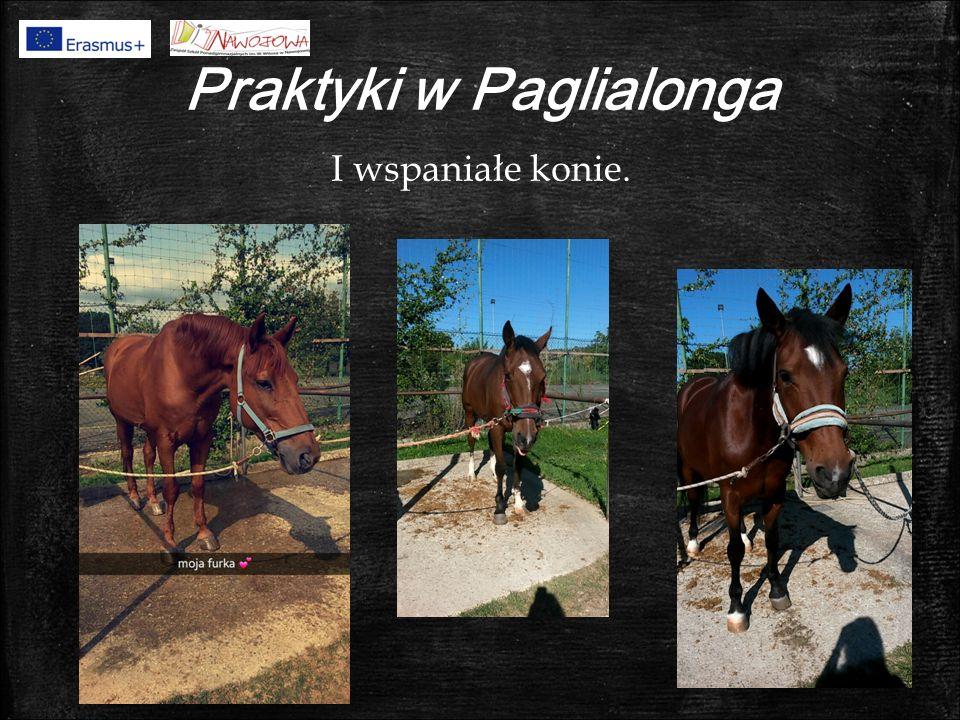 Praktyki w Paglialonga I wspaniałe konie.
