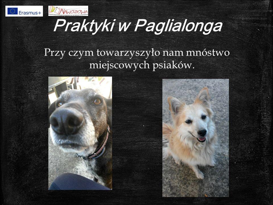 Praktyki w Paglialonga Przy czym towarzyszyło nam mnóstwo miejscowych psiaków.