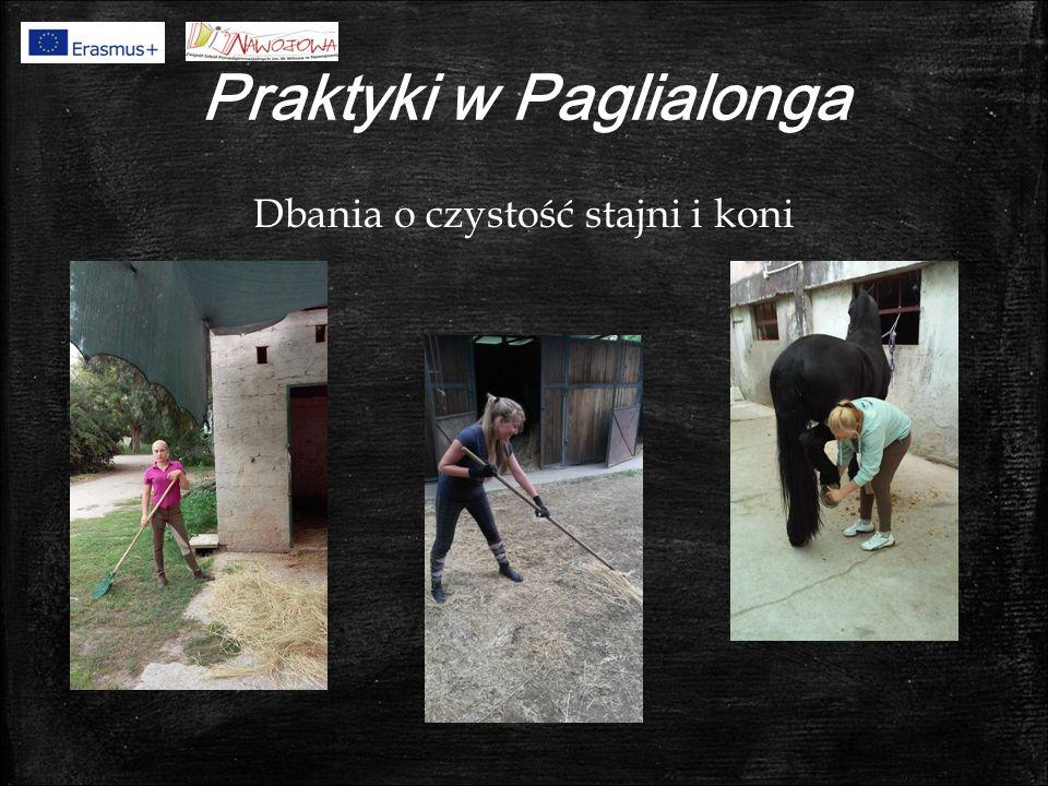 Praktyki w Paglialonga Dbania o czystość stajni i koni
