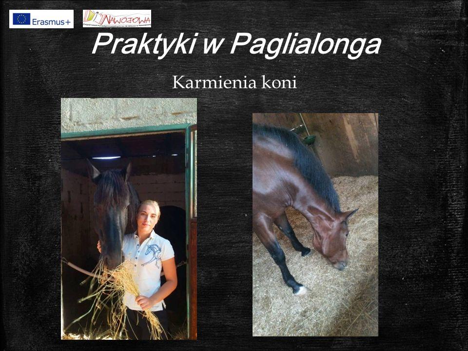 Praktyki w Paglialonga Karmienia koni