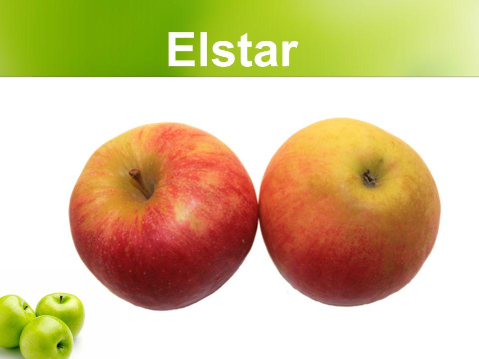 Elstar