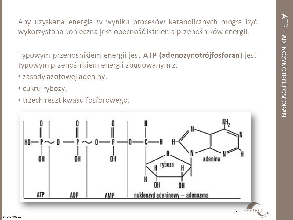ATP - ADENOZYNOTRÓJFOSFORAN Aby uzyskana energia w wyniku procesów katabolicznych mogła być wykorzystana konieczna jest obecność istnienia przenośnikó