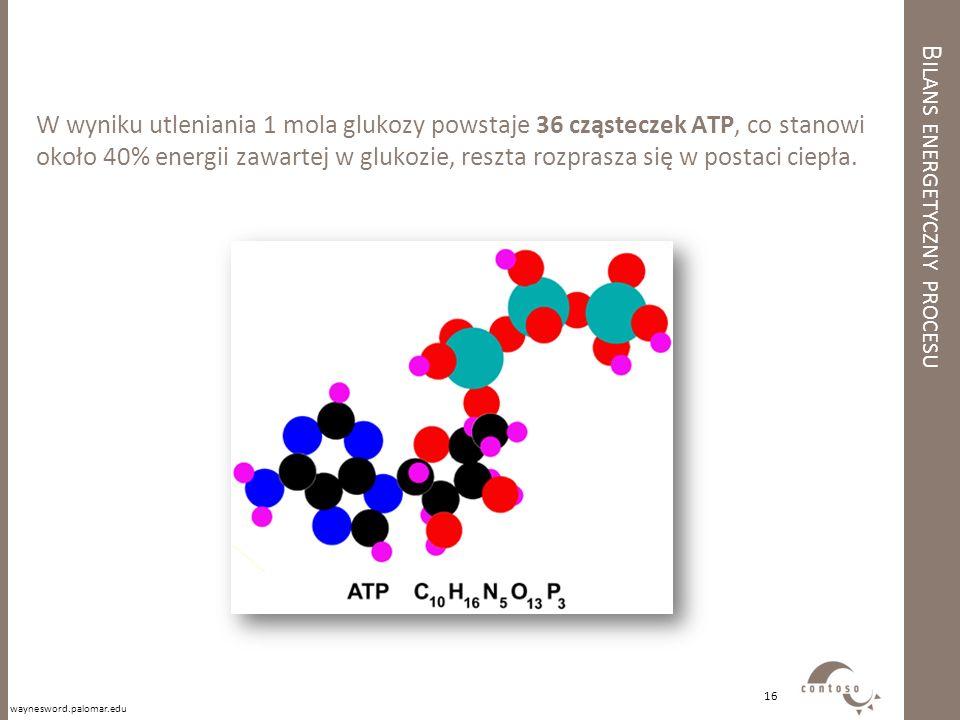 B ILANS ENERGETYCZNY PROCESU W wyniku utleniania 1 mola glukozy powstaje 36 cząsteczek ATP, co stanowi około 40% energii zawartej w glukozie, reszta r