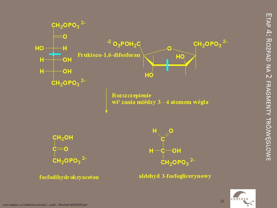E TAP 4: R OZPAD NA 2 FRAGMENTY TRÓJWĘGLOWE wsiz.rzeszow.pl/kadra/swolowiec/...Local.../Biochemia%20W9.ppt 22