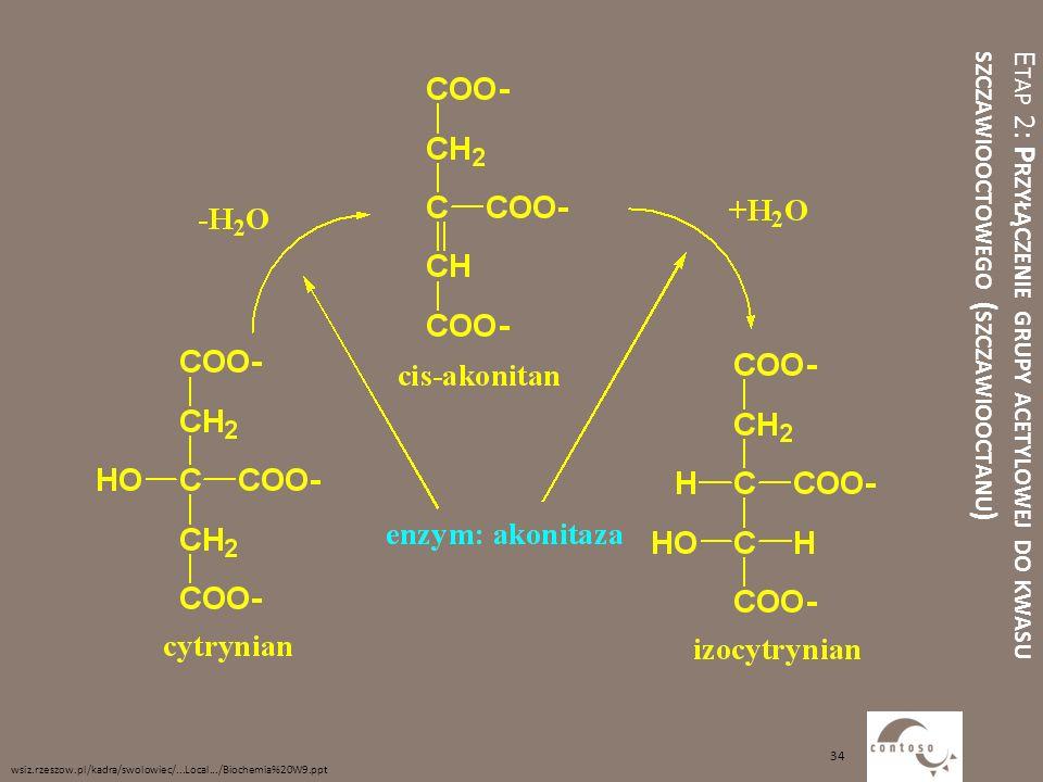 E TAP 2: P RZYŁĄCZENIE GRUPY ACETYLOWEJ DO KWASU SZCZAWIOOCTOWEGO ( SZCZAWIOOCTANU ) wsiz.rzeszow.pl/kadra/swolowiec/...Local.../Biochemia%20W9.ppt 34
