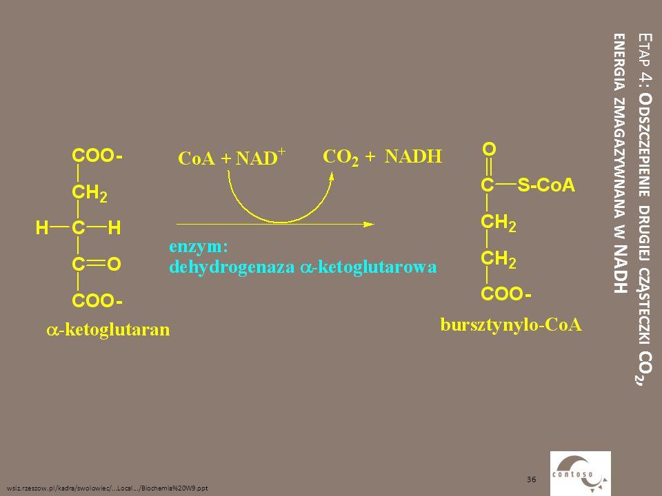 E TAP 4: O DSZCZEPIENIE DRUGIEJ CZĄSTECZKI CO 2, ENERGIA ZMAGAZYWNANA W NADH wsiz.rzeszow.pl/kadra/swolowiec/...Local.../Biochemia%20W9.ppt 36