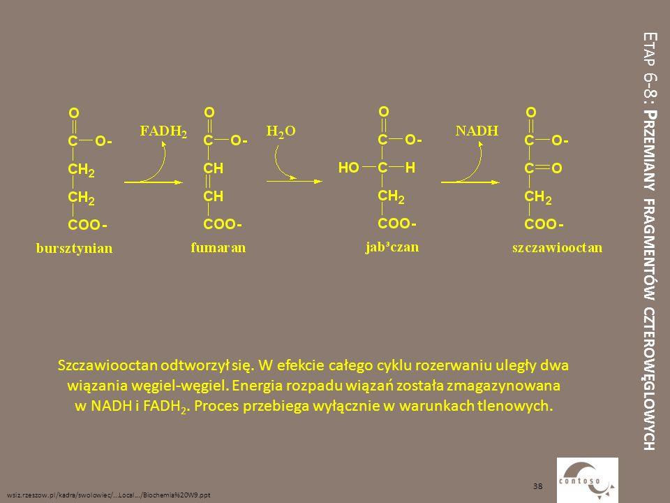 E TAP 6-8: P RZEMIANY FRAGMENTÓW CZTEROWĘGLOWYCH Szczawiooctan odtworzył się. W efekcie całego cyklu rozerwaniu uległy dwa wiązania węgiel-węgiel. Ene