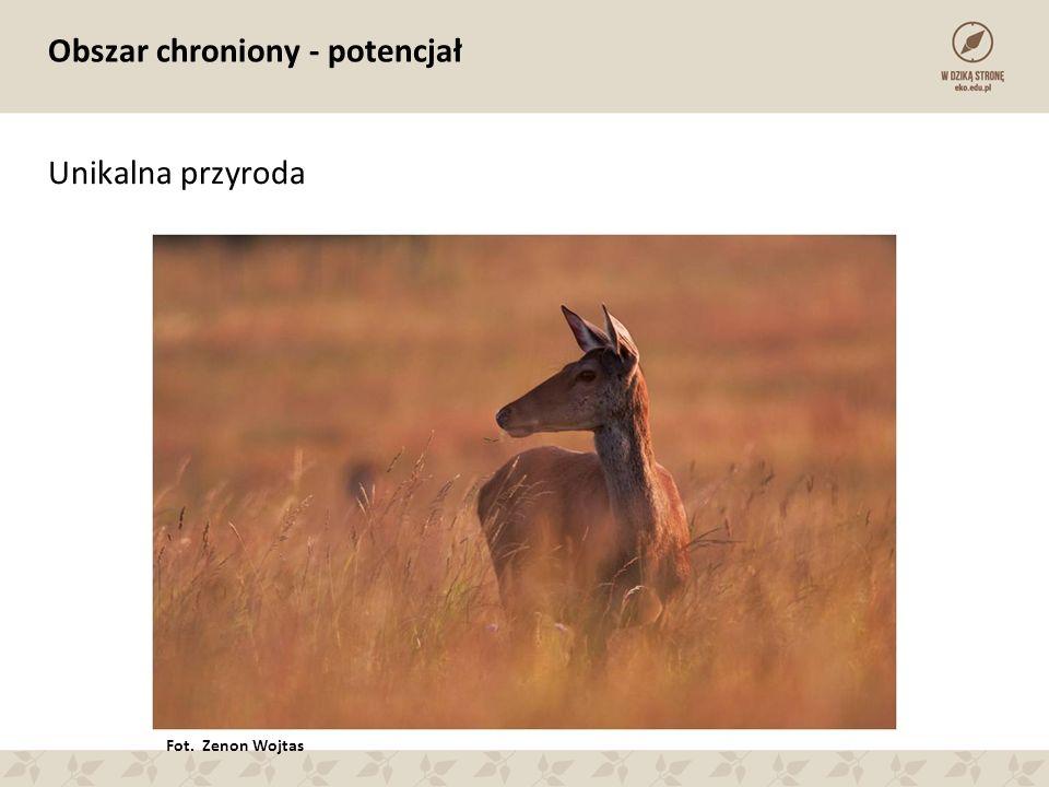Obszar chroniony - potencjał Unikalna przyroda Fot. Zenon Wojtas