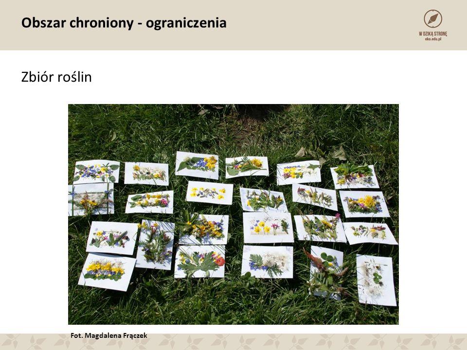 Obszar chroniony - ograniczenia Zbiór roślin Fot. Magdalena Frączek