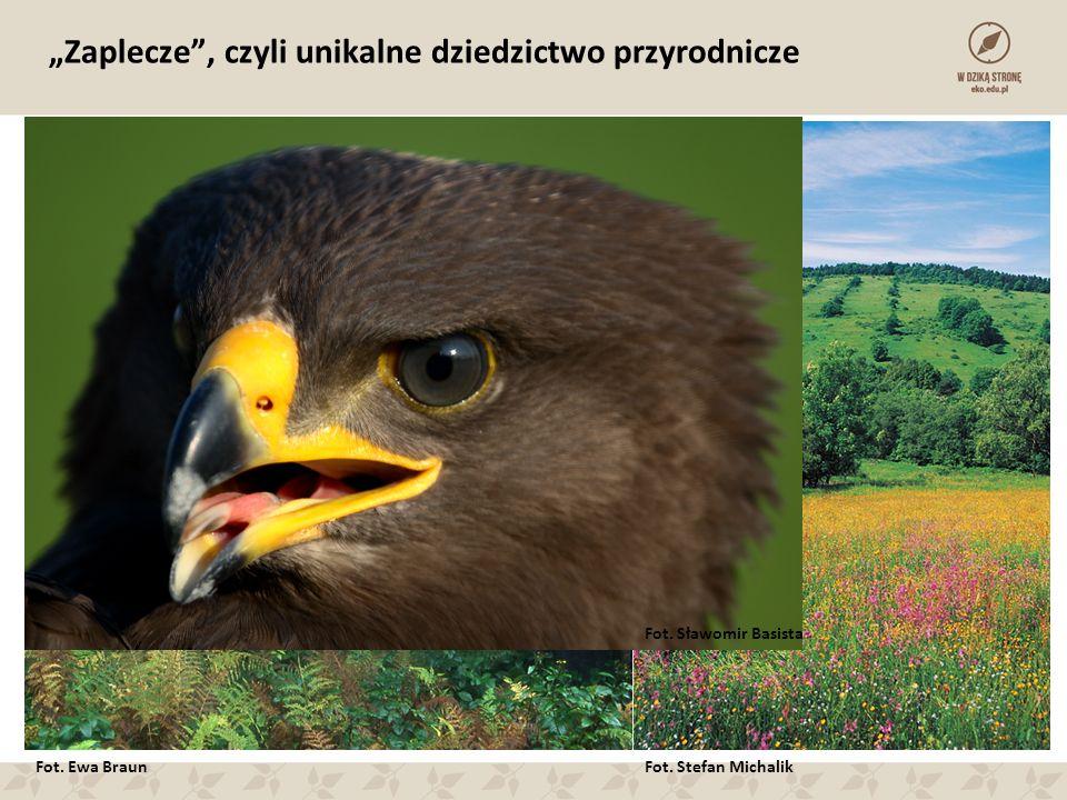"""Fot. Zenon Wojtas """"Zaplecze , czyli unikalne dziedzictwo przyrodnicze Fot."""