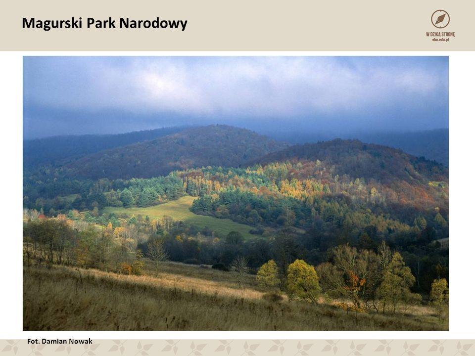 Magurski Park Narodowy Fot. Damian Nowak