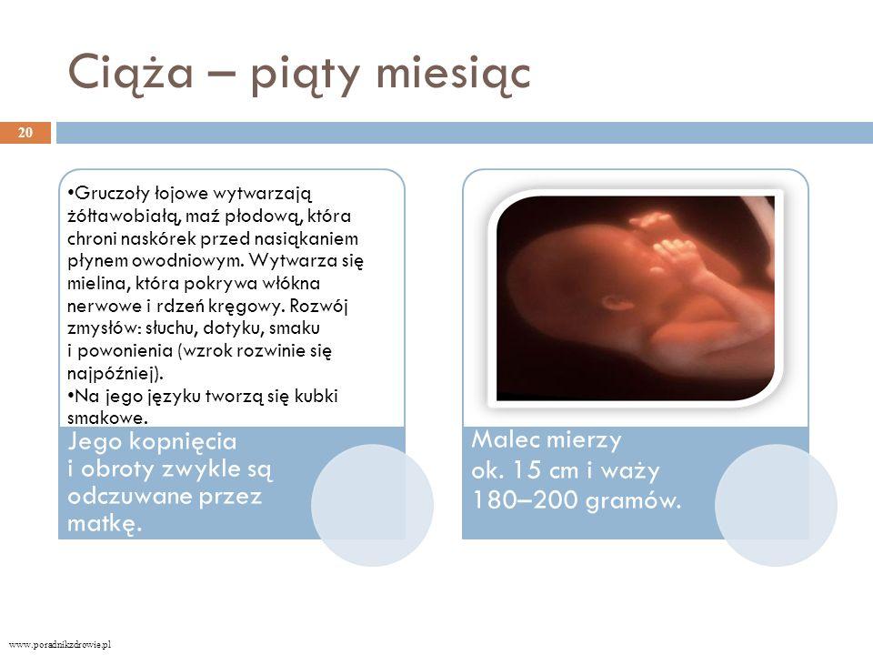 Ciąża – piąty miesiąc Gruczoły łojowe wytwarzają żółtawobiałą, maź płodową, która chroni naskórek przed nasiąkaniem płynem owodniowym.