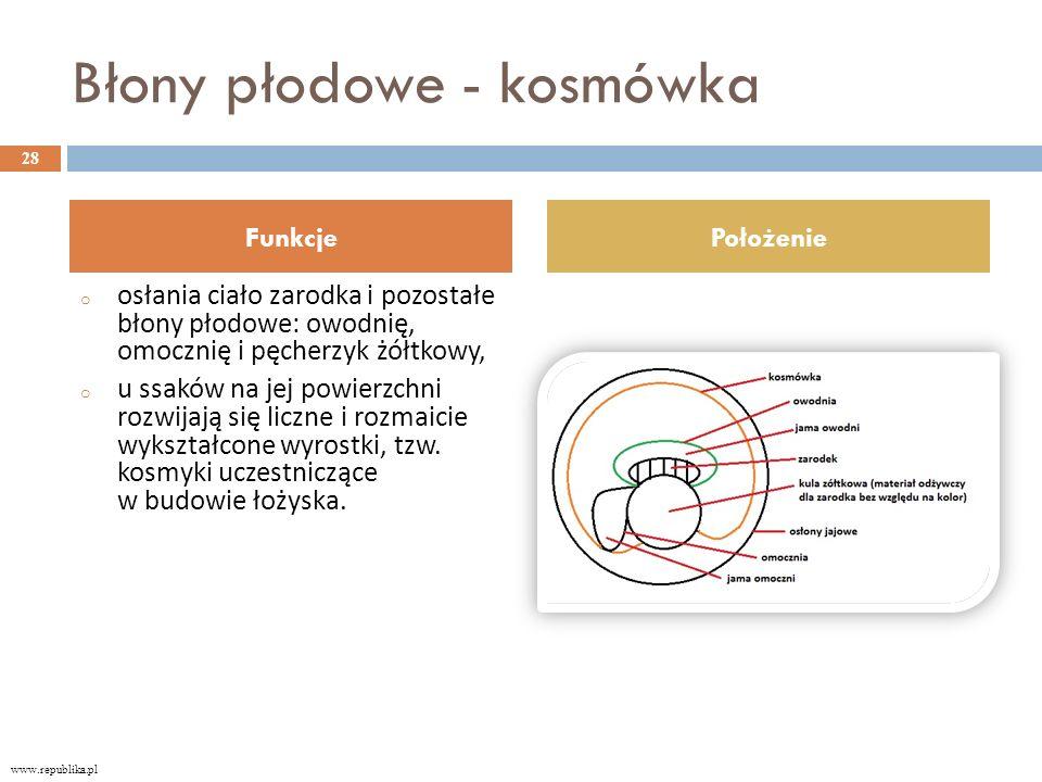 Błony płodowe - kosmówka o osłania ciało zarodka i pozostałe błony płodowe: owodnię, omocznię i pęcherzyk żółtkowy, o u ssaków na jej powierzchni rozwijają się liczne i rozmaicie wykształcone wyrostki, tzw.