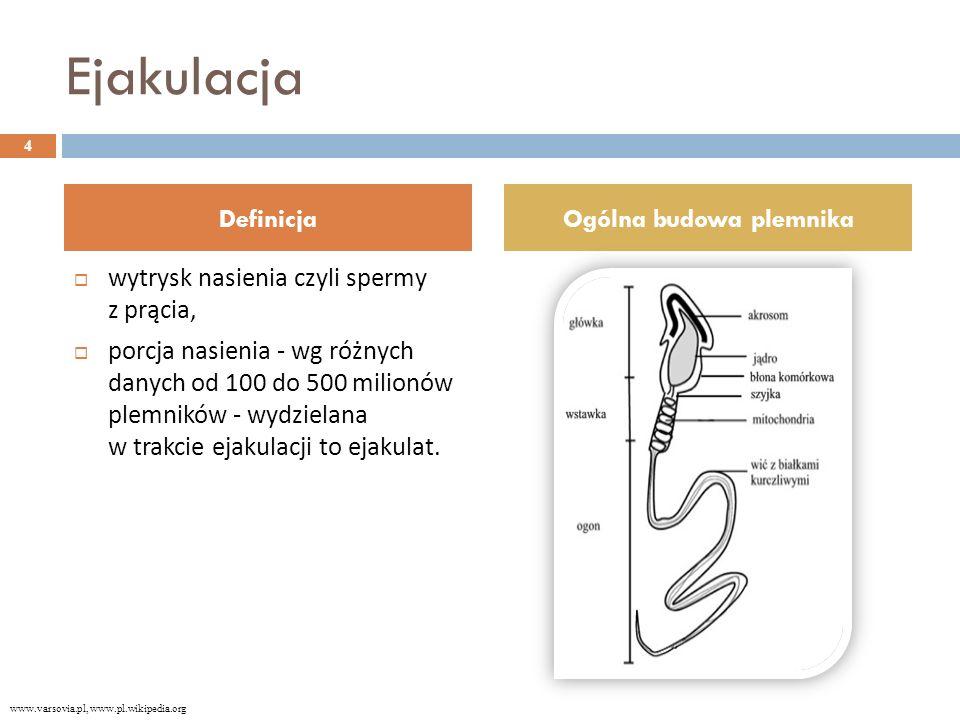 Ejakulacja  wytrysk nasienia czyli spermy z prącia,  porcja nasienia - wg różnych danych od 100 do 500 milionów plemników - wydzielana w trakcie ejakulacji to ejakulat.