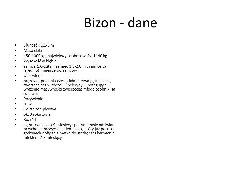 Bizon - dane Długość : 2,1-3 m Masa ciała 450-1000 kg; największy osobnik ważył 1140 kg. Wysokość w kłębie samica 1,6-1,8 m, samiec 1,8-2,0 m ; samice