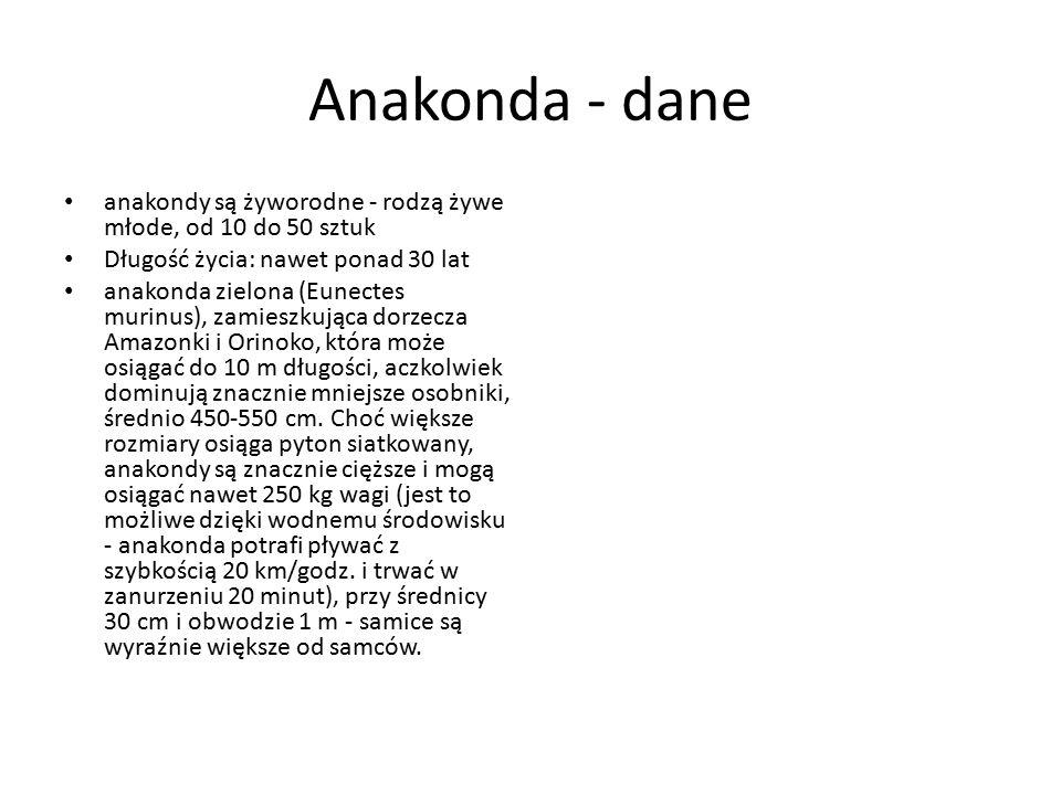 Anakonda - dane anakondy są żyworodne - rodzą żywe młode, od 10 do 50 sztuk Długość życia: nawet ponad 30 lat anakonda zielona (Eunectes murinus), zam
