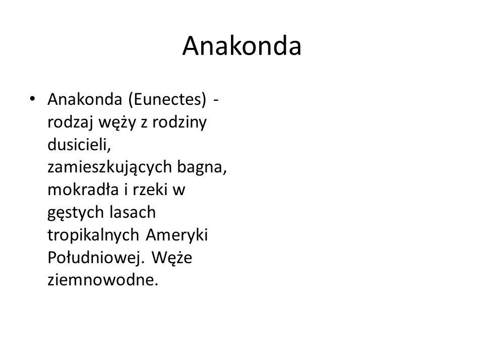 Anakonda Anakonda (Eunectes) - rodzaj węży z rodziny dusicieli, zamieszkujących bagna, mokradła i rzeki w gęstych lasach tropikalnych Ameryki Południo