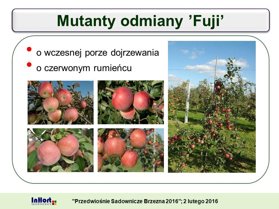 Mutanty odmiany 'Fuji' Przedwiośnie Sadownicze Brzezna 2016 ; 2 lutego 2016 o wczesnej porze dojrzewania o czerwonym rumieńcu