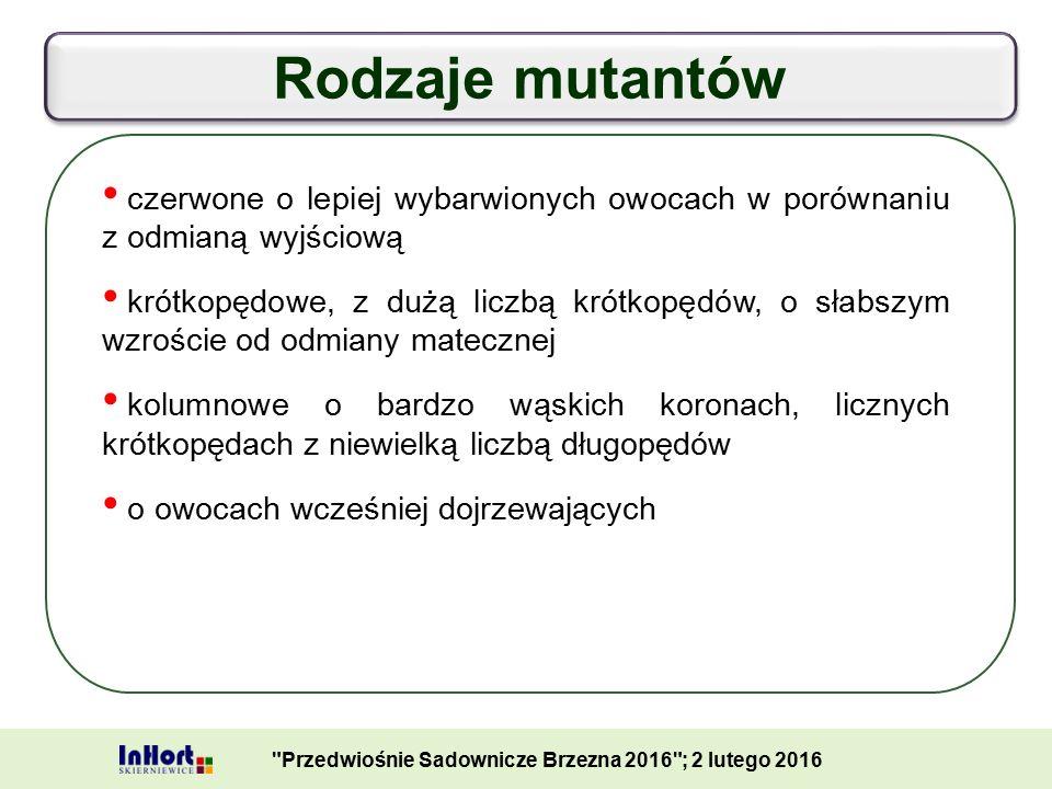 Mutanty odmiany 'Gala' - rewersja Przedwiośnie Sadownicze Brzezna 2016 ; 2 lutego 2016