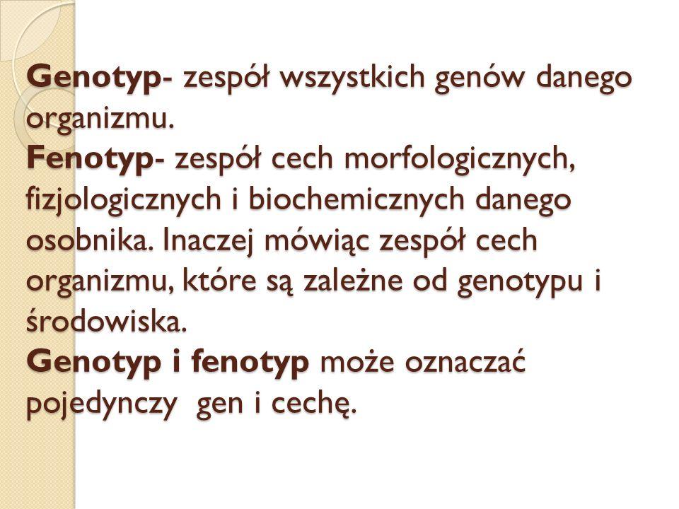 Genotyp- zespół wszystkich genów danego organizmu. Fenotyp- zespół cech morfologicznych, fizjologicznych i biochemicznych danego osobnika. Inaczej mów