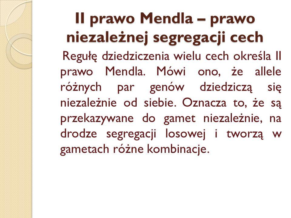 II prawo Mendla – prawo niezależnej segregacji cech Regułę dziedziczenia wielu cech określa II prawo Mendla. Mówi ono, że allele różnych par genów dzi