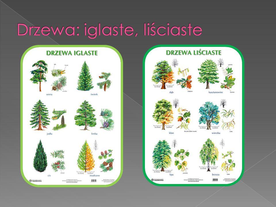  Dąb – rodzaj drzew, rzadziej wysokich krzewów, zaliczony do rodziny bukowatych.