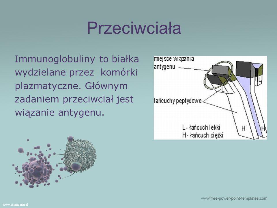 Immunoglobuliny to białka wydzielane przez komórki plazmatyczne. Głównym zadaniem przeciwciał jest wiązanie antygenu. www.sciaga.onet.pl Przeciwciała
